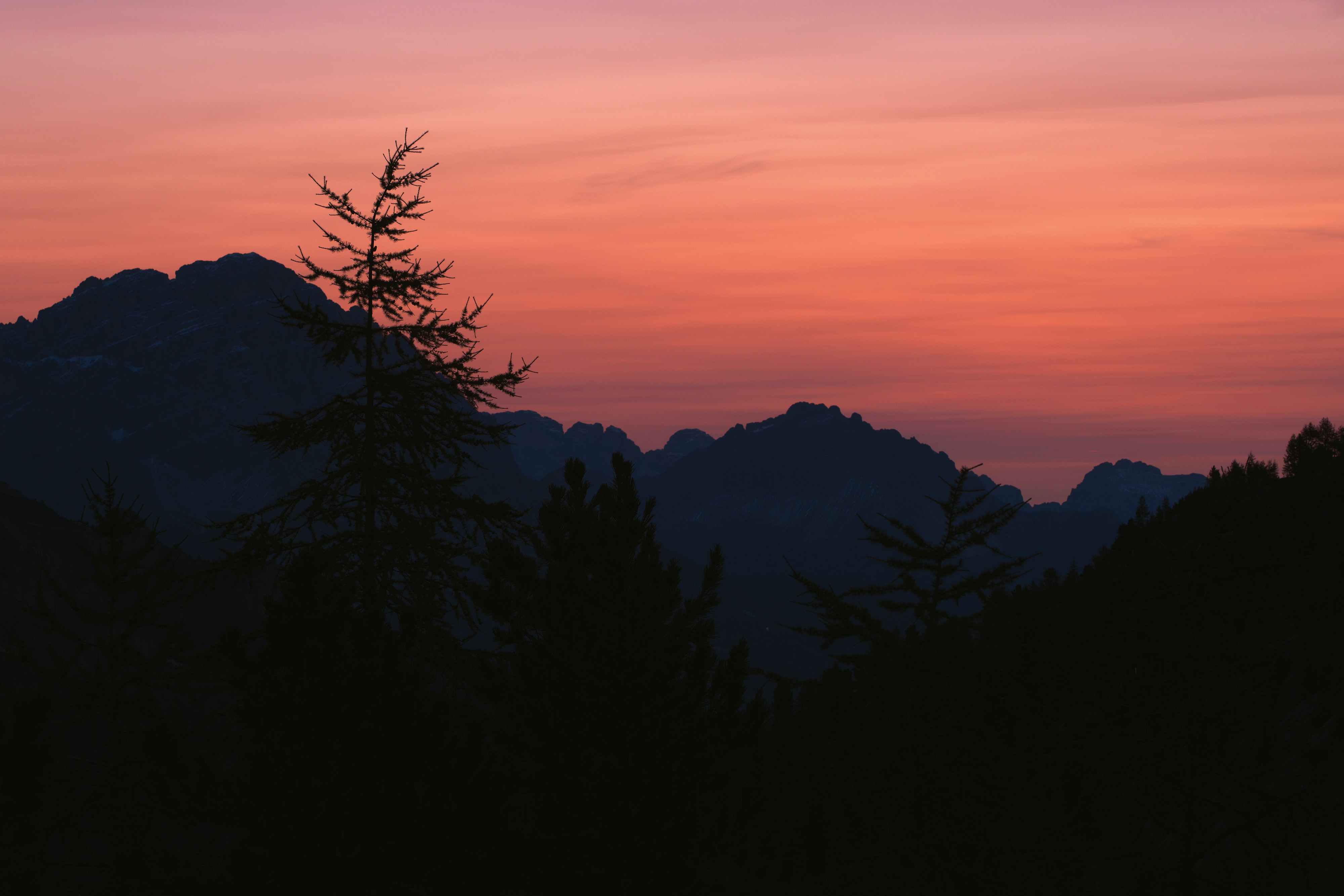 silhouette photo of trees and mountain at golden hour
