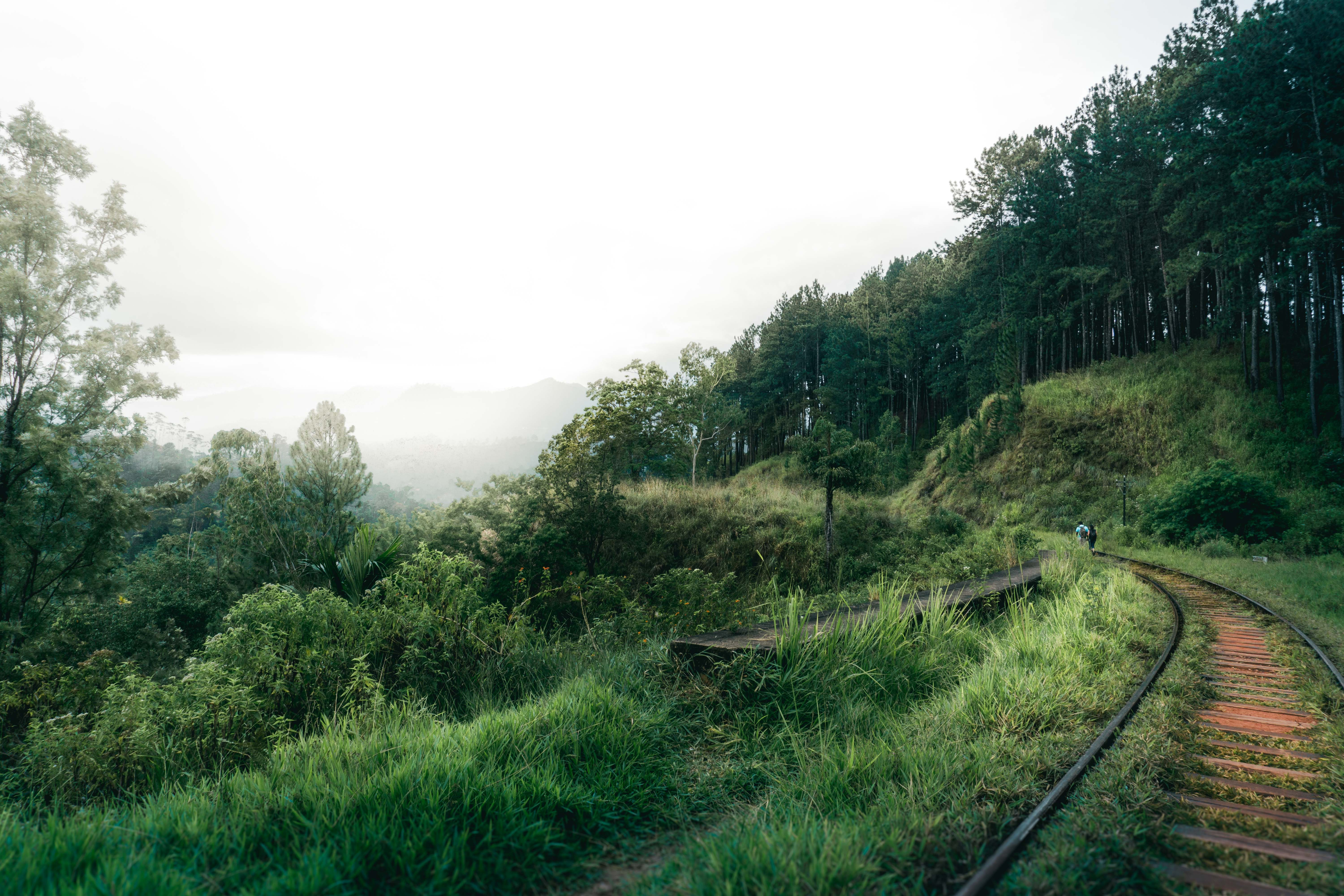 photography of railway near forest
