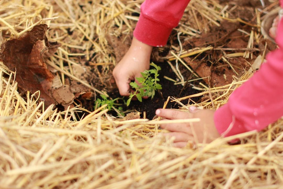 Grow love garden