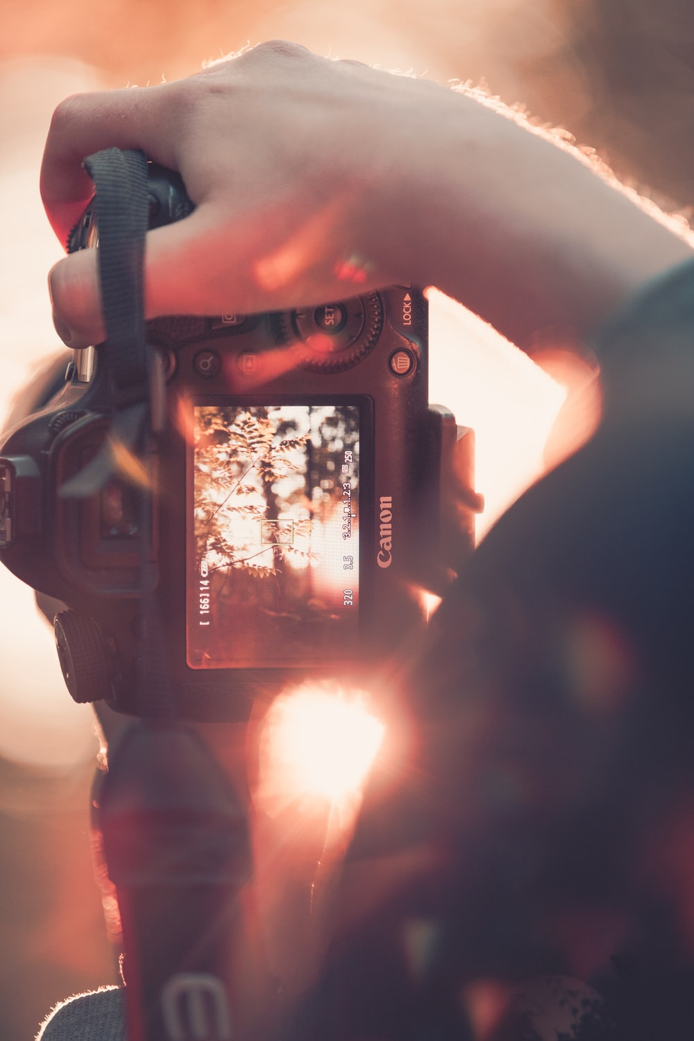 selective focus photography of person holding Canon DSLR camera and taking picture of tree