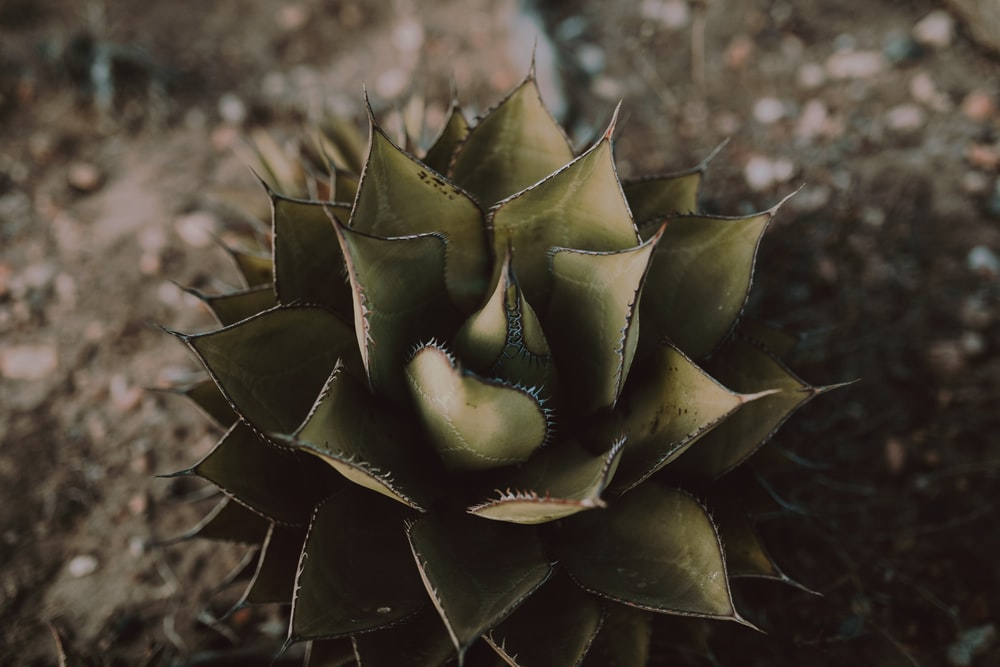 green and brown succulent plant during daytime