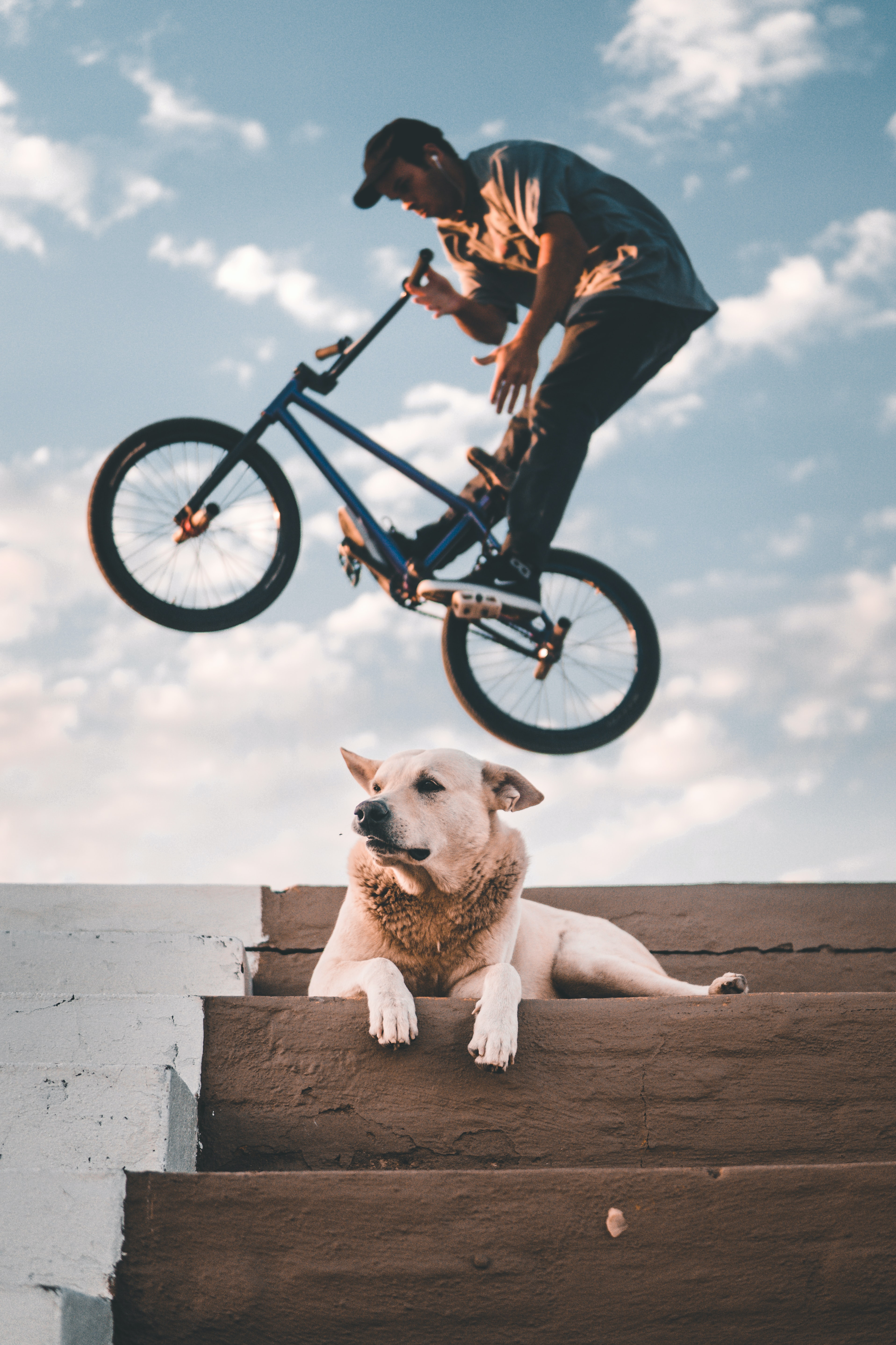 man doing BMX tricks near white dog