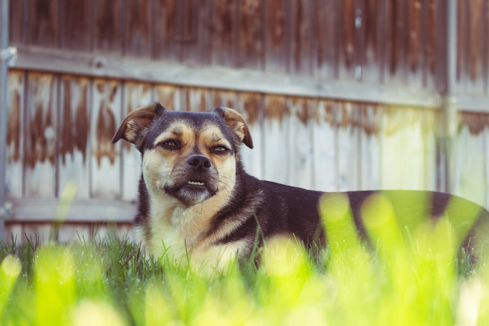 short-coated black and brown dog near fence
