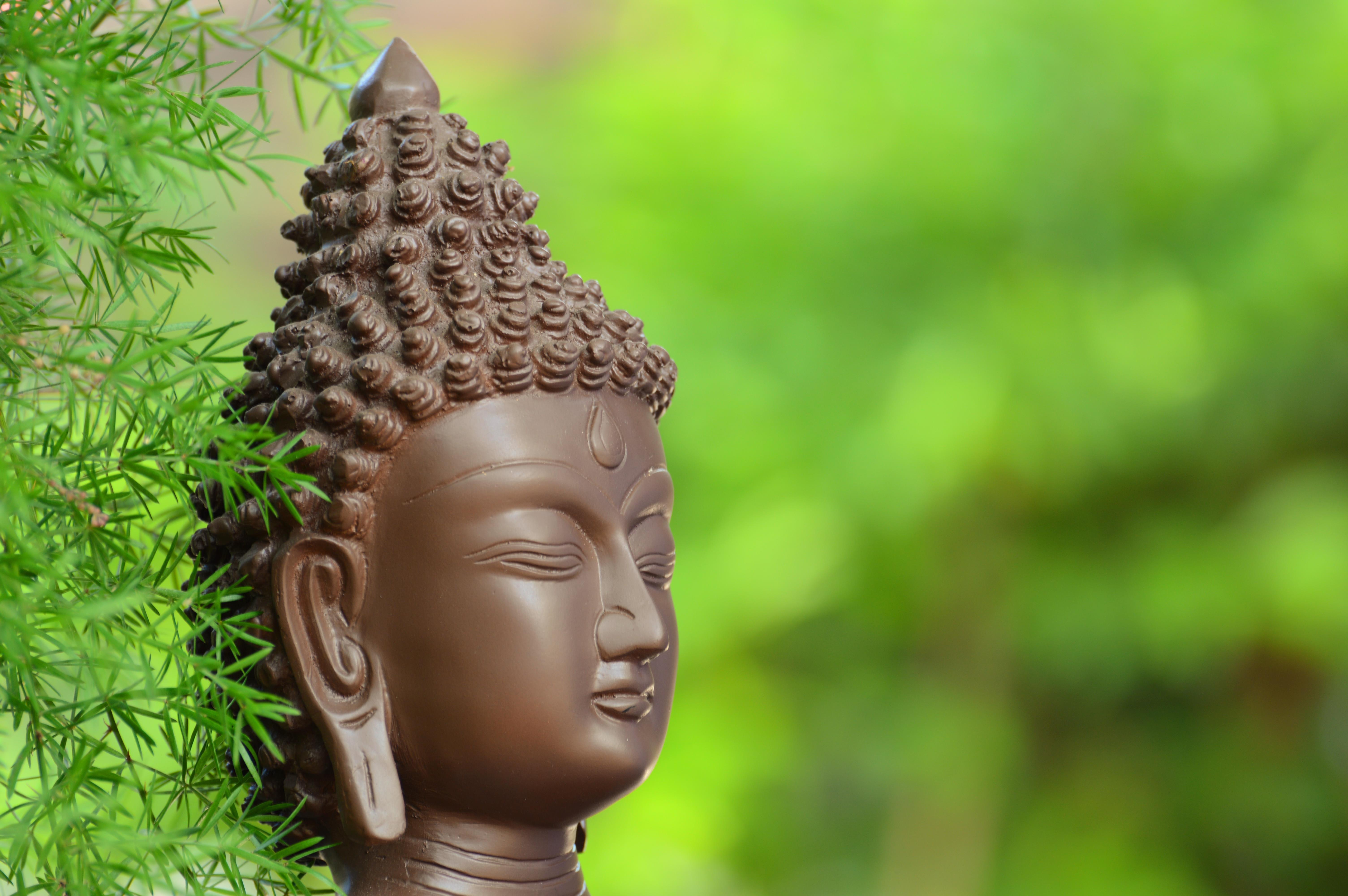 brown Buddha statue beside green plants