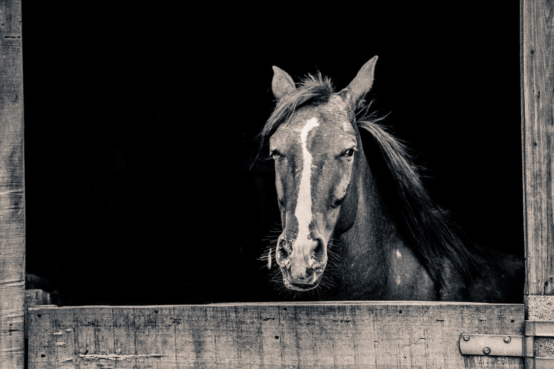 Horses are amazing animals. They can sense your fear and your peace, and will respond appropriately. They are so sensible, and yet so powerful.