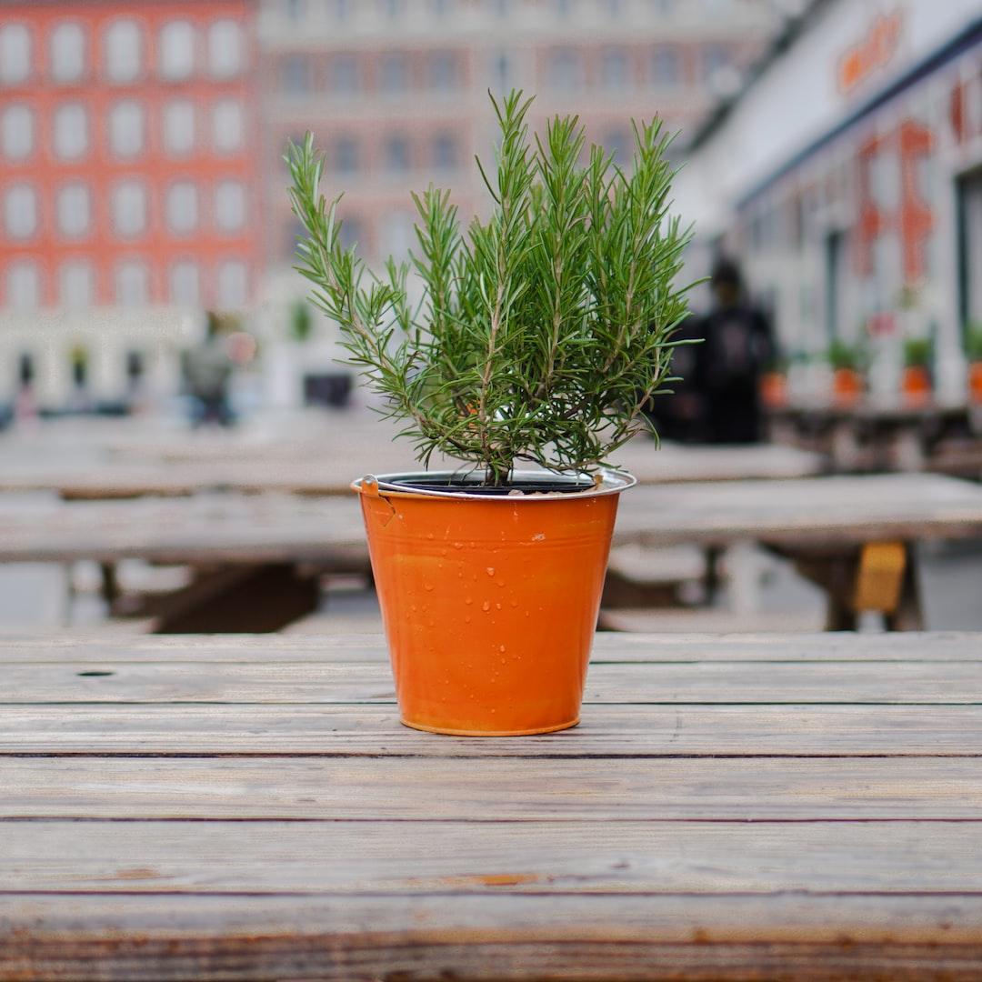 https://www.instagram.com/francistogram/  Carrot or pot?