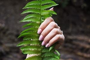 person holding fern leaf