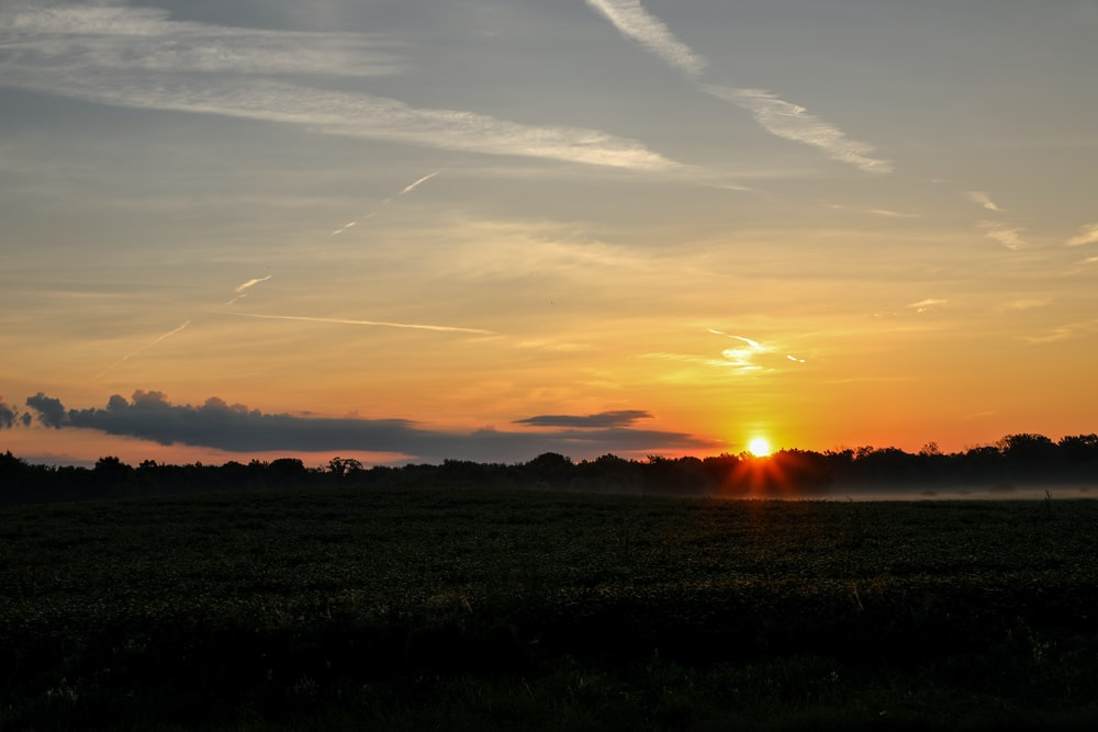 grass field during golden hour