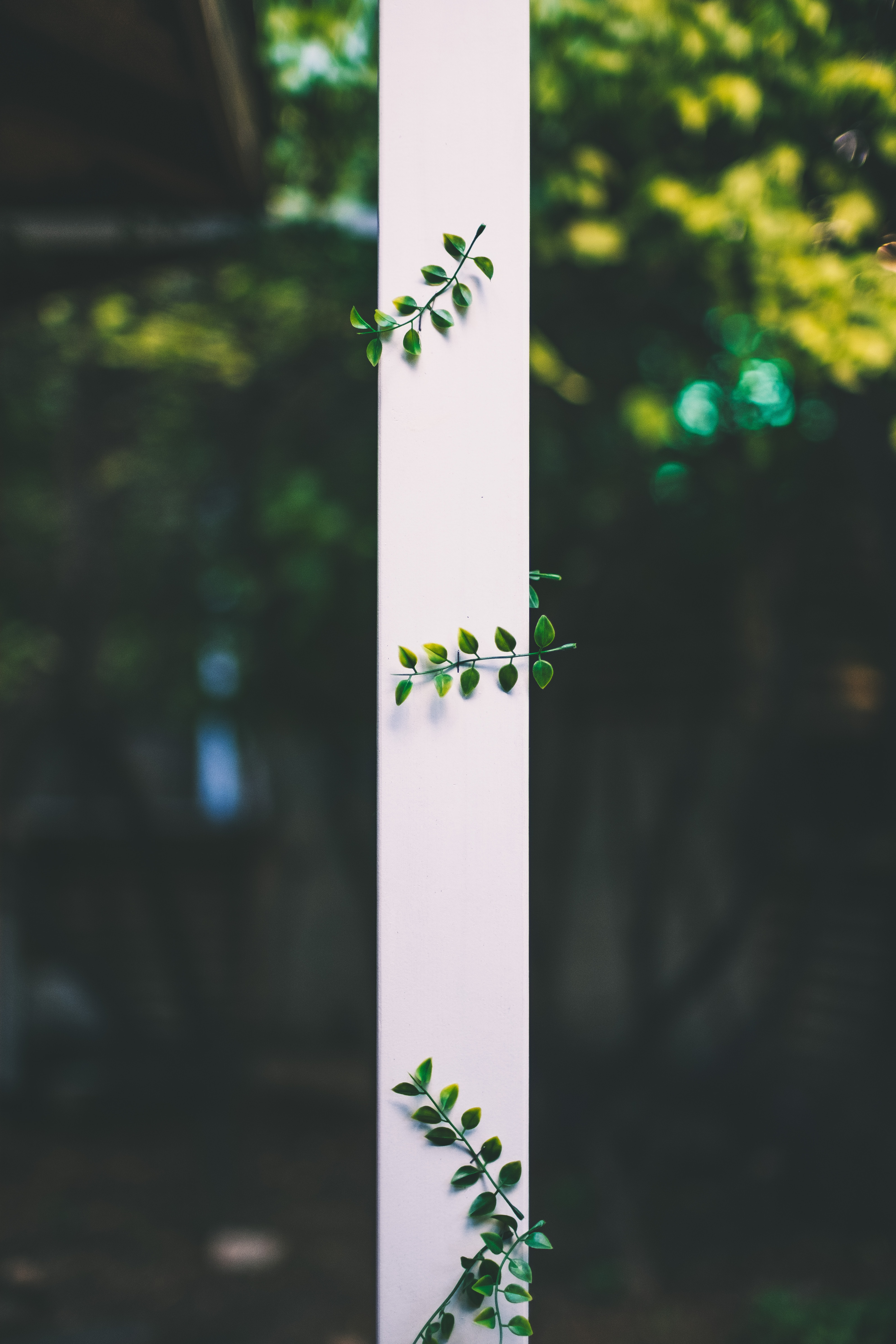 selective focus of white rod with green leaves