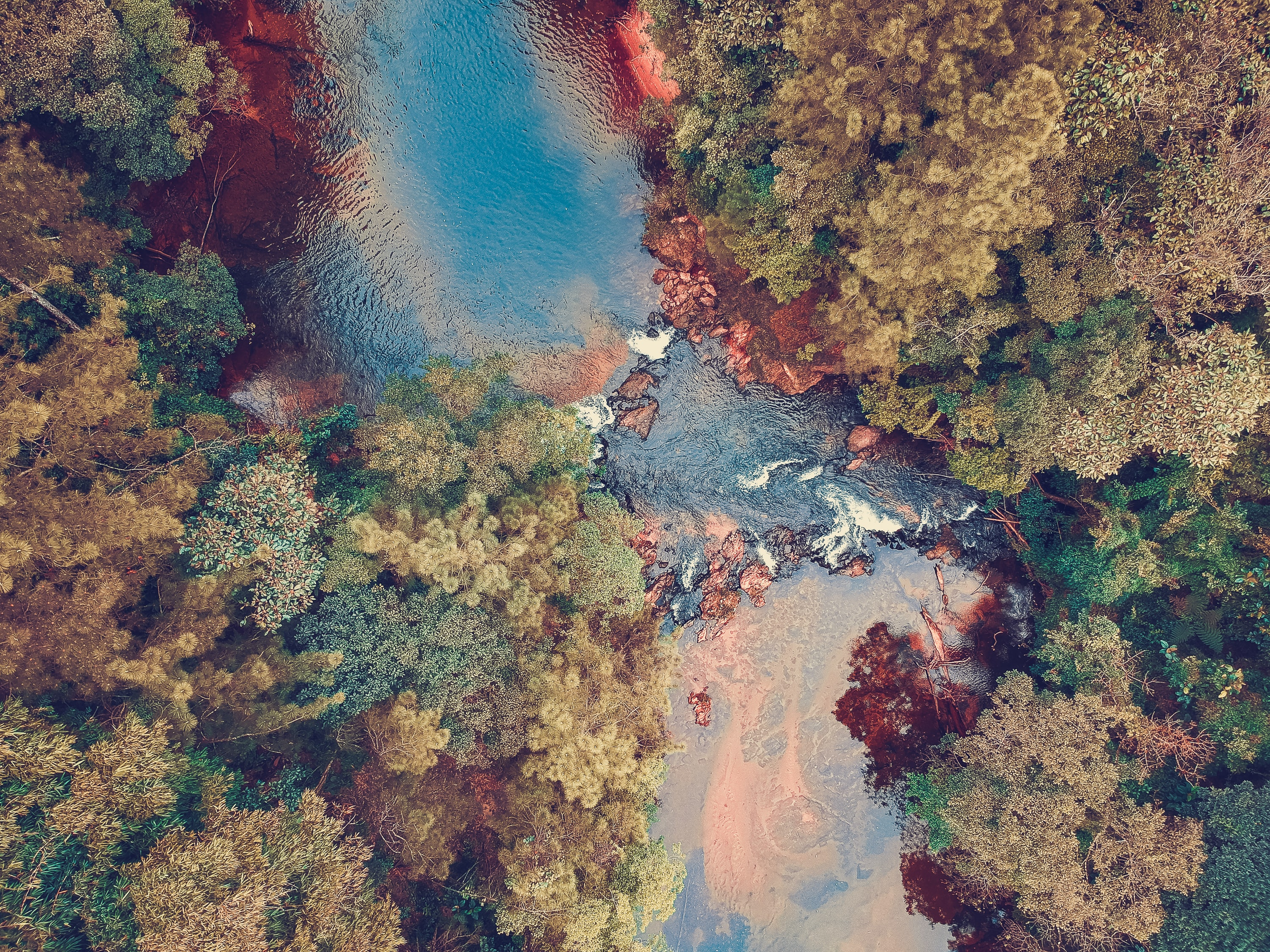 aerial photo of river between trees