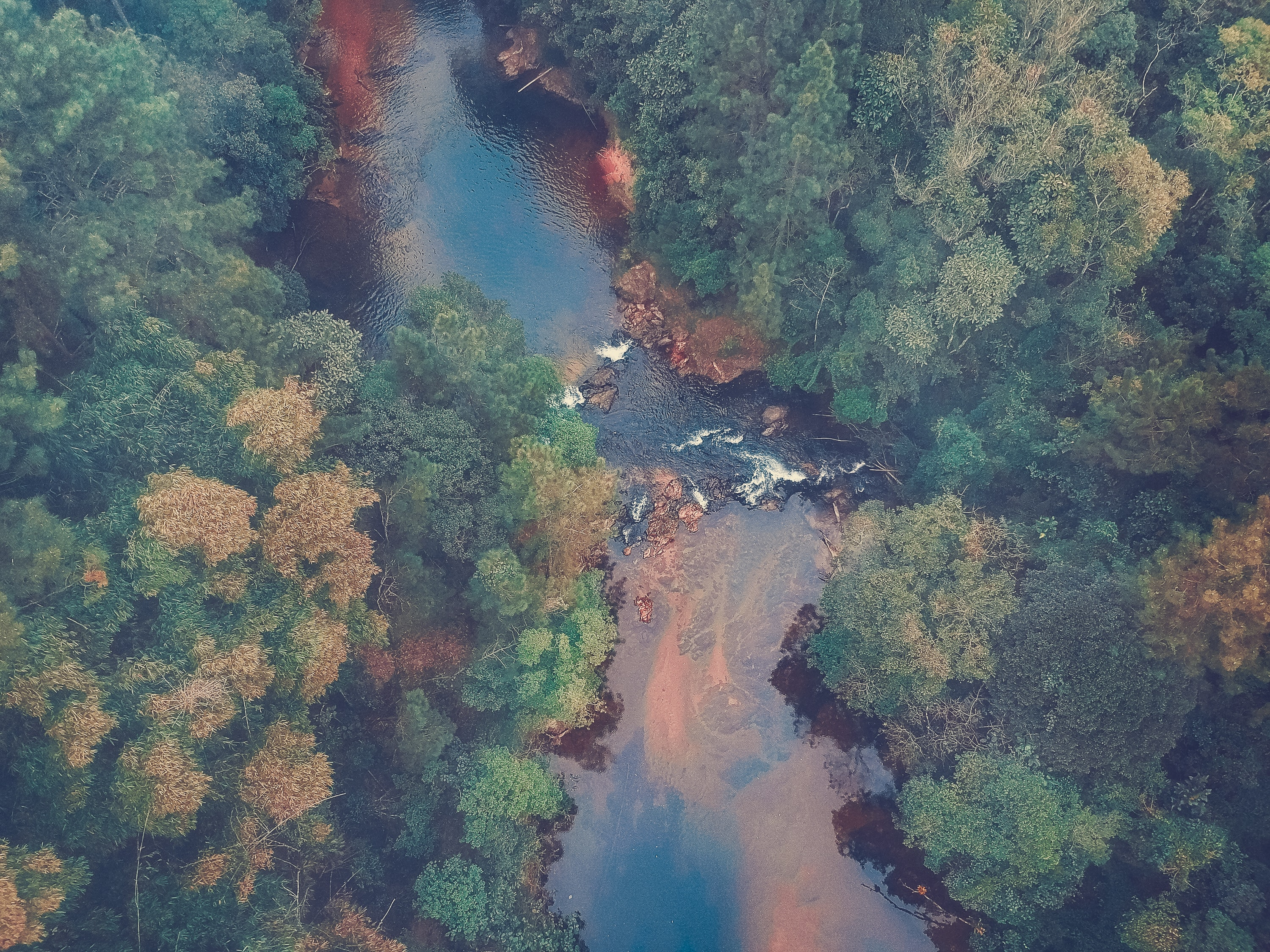 bird's-eye view photography of river flowing between trees