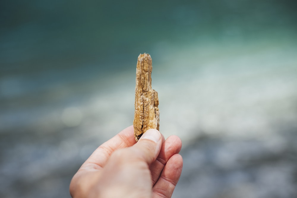 person holding brown wood