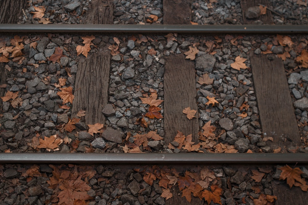 dried leaves and stones on train tracks