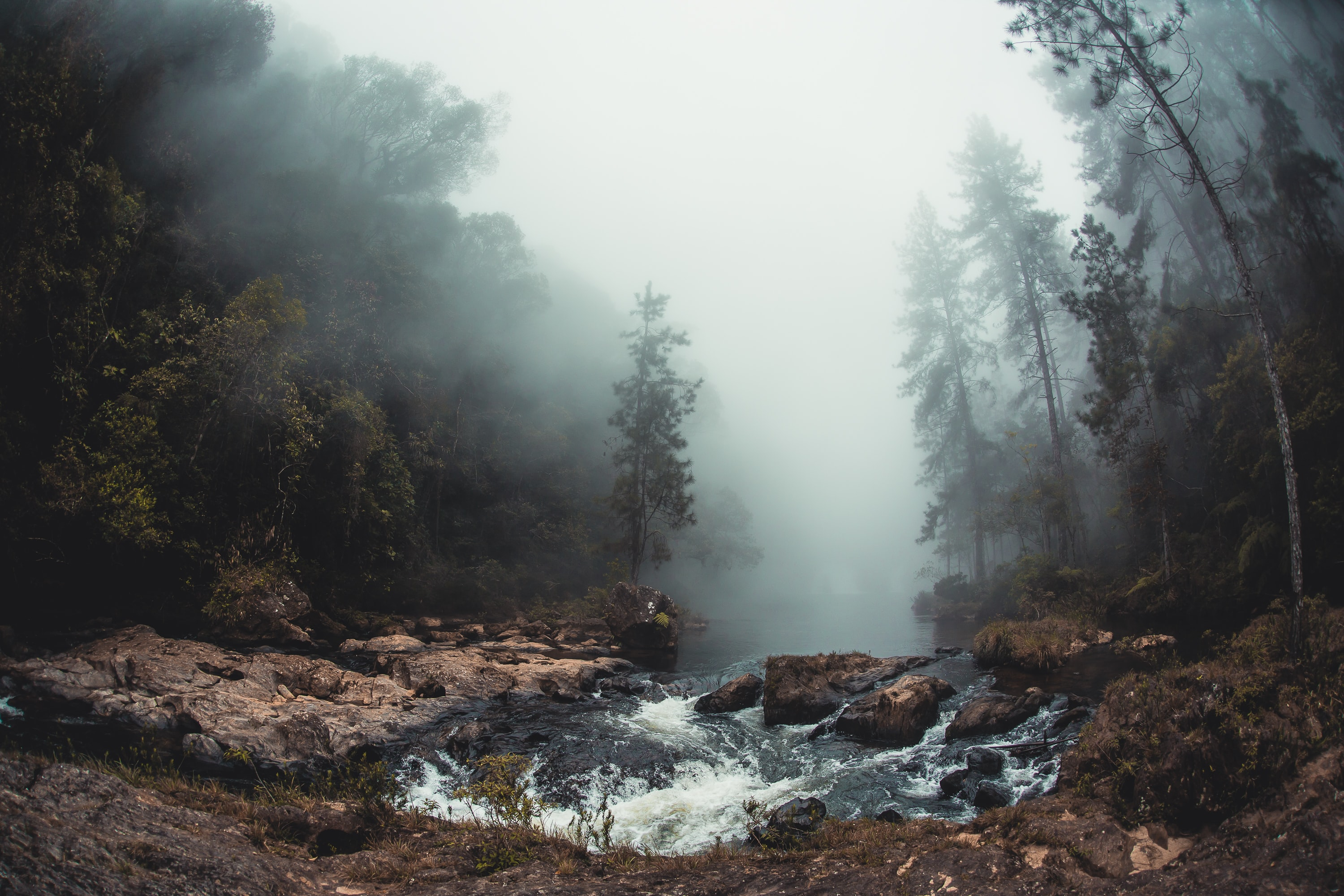 landscape photo of river between trees covered with fog