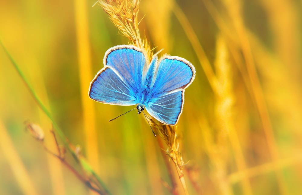 blue butterfly perched on grass at daytime