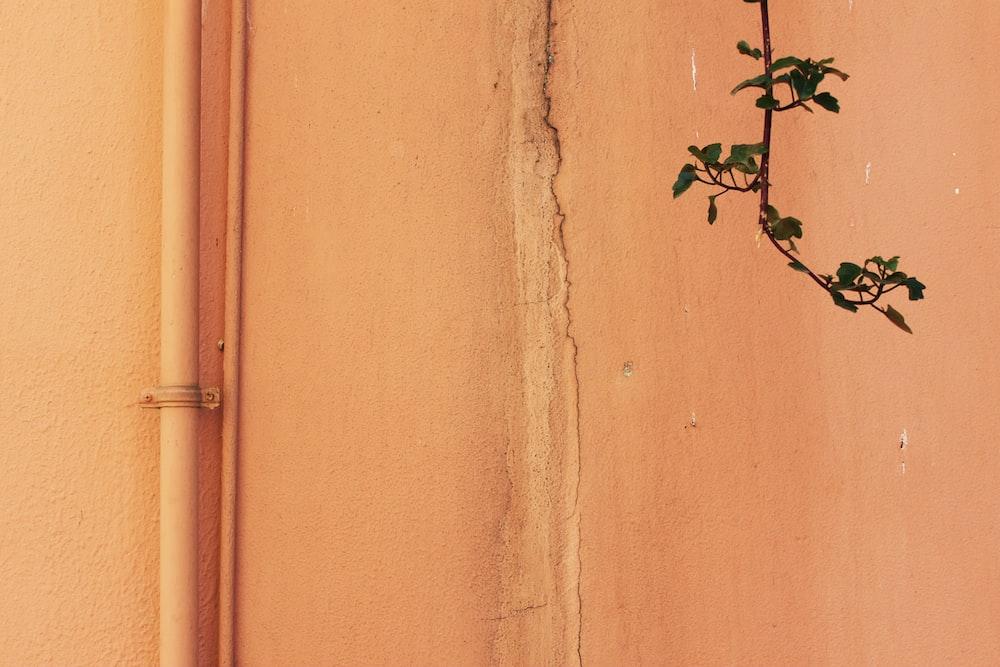 green leafed tree branch near beige wall