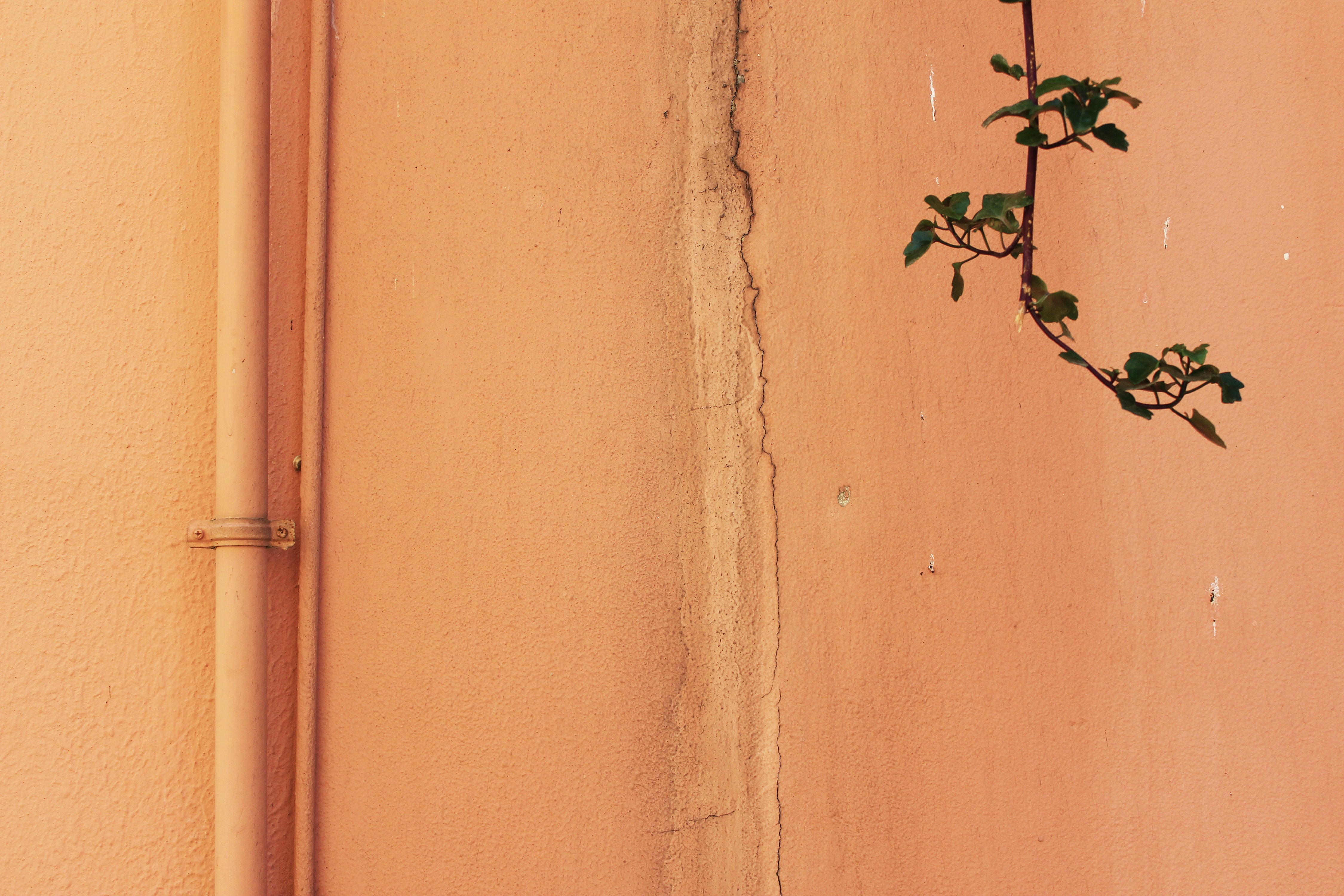 green leafed tree branch near beige wall