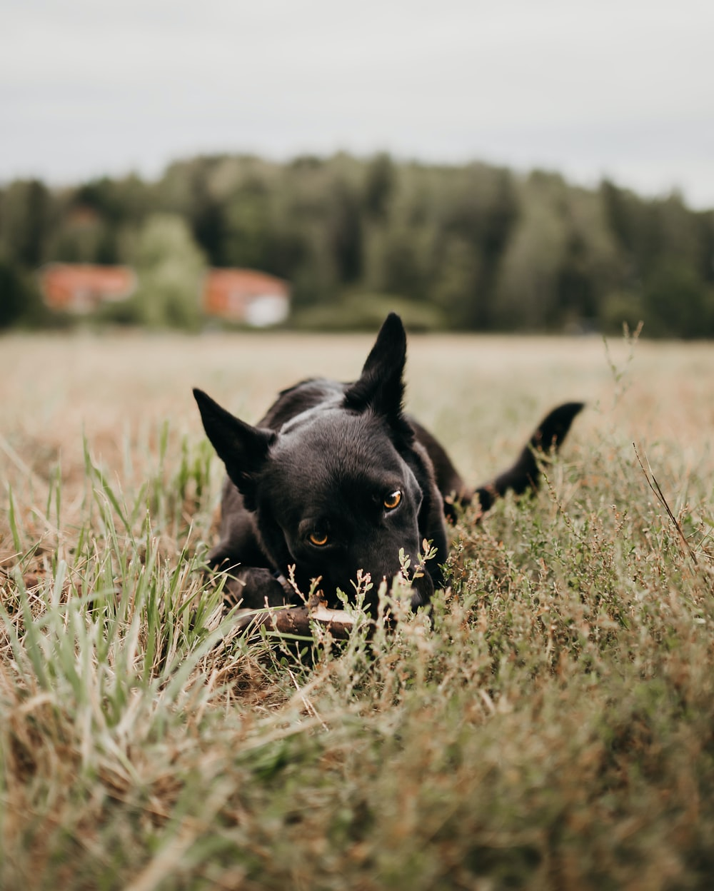 selective focus photography of dog on green grass field