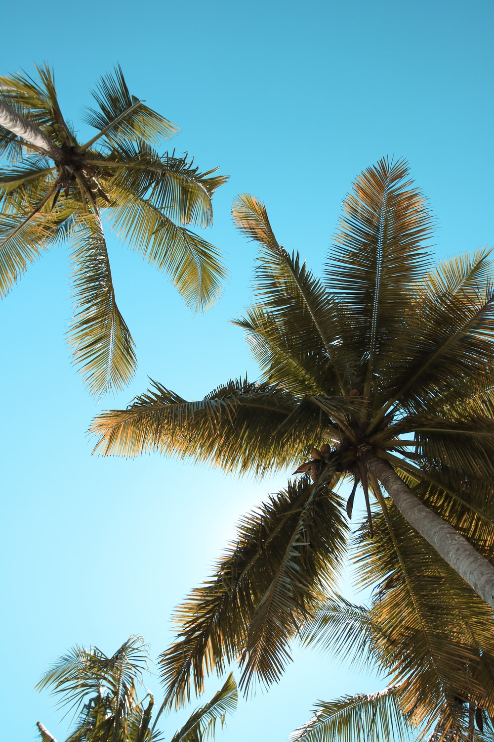 photo of two coconut trees at daytime