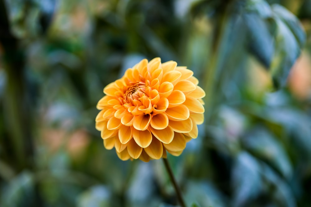 shallow focus photography of yellow flower during daytime