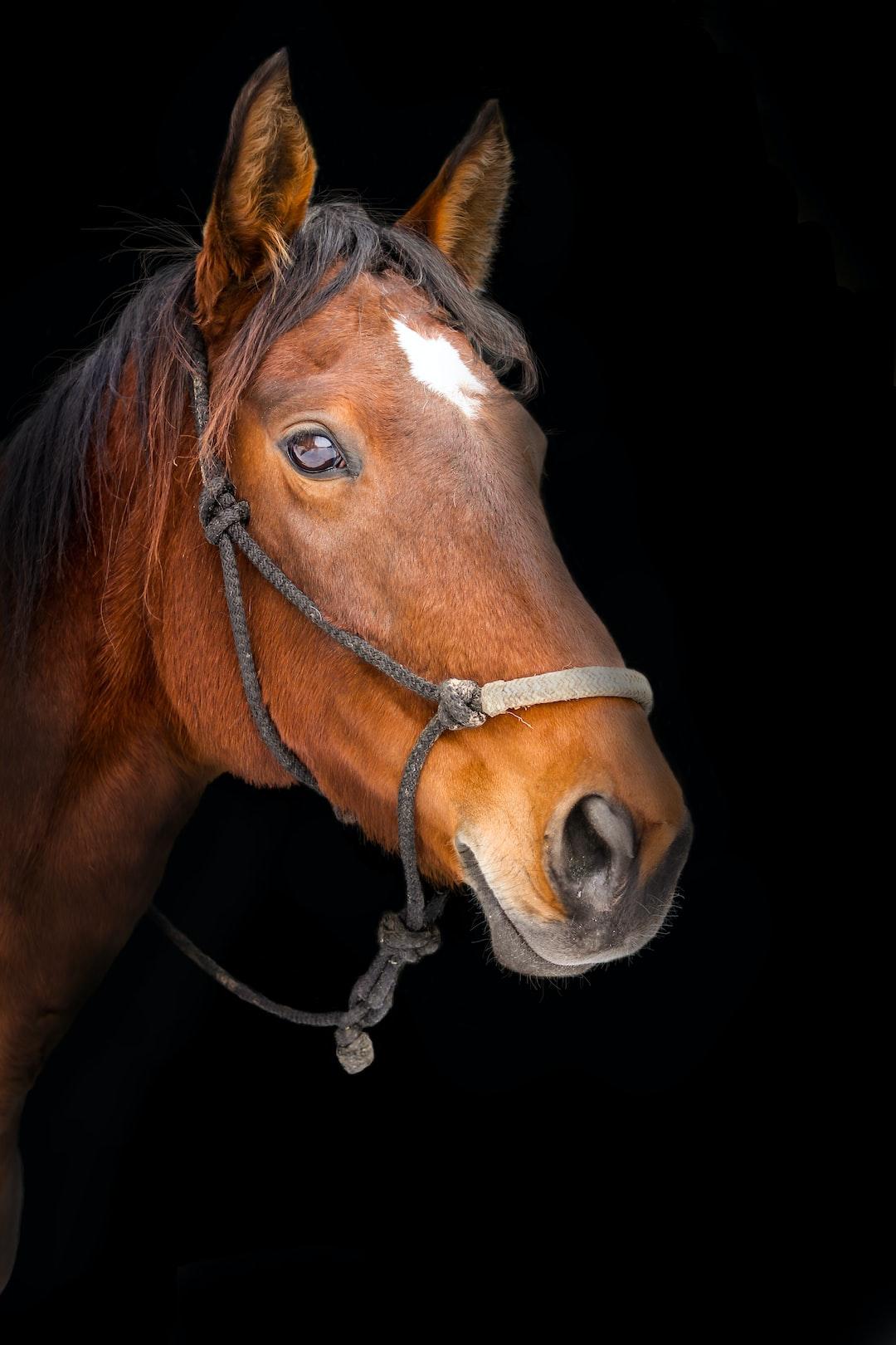 Isolated Horse on black background