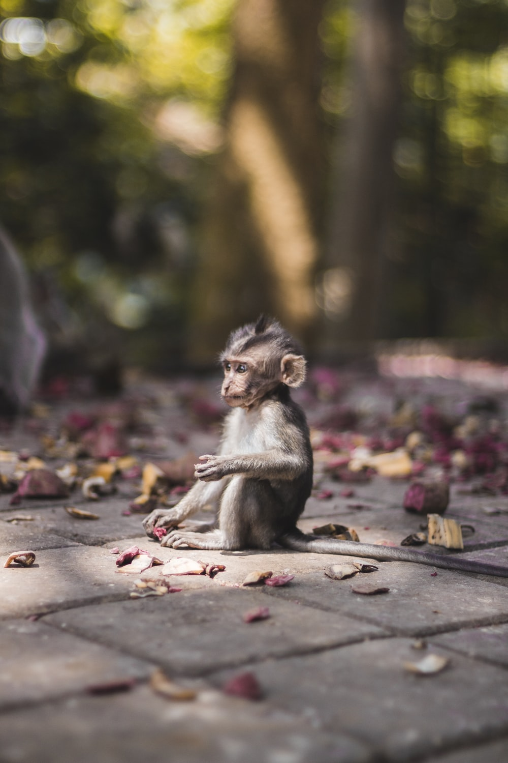 selective focus photography of brow monkey sitting on brick pavement