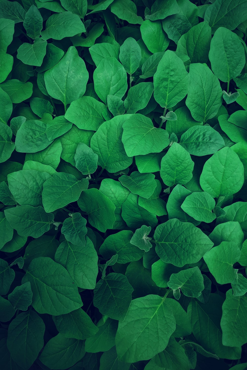 photography of green leaves