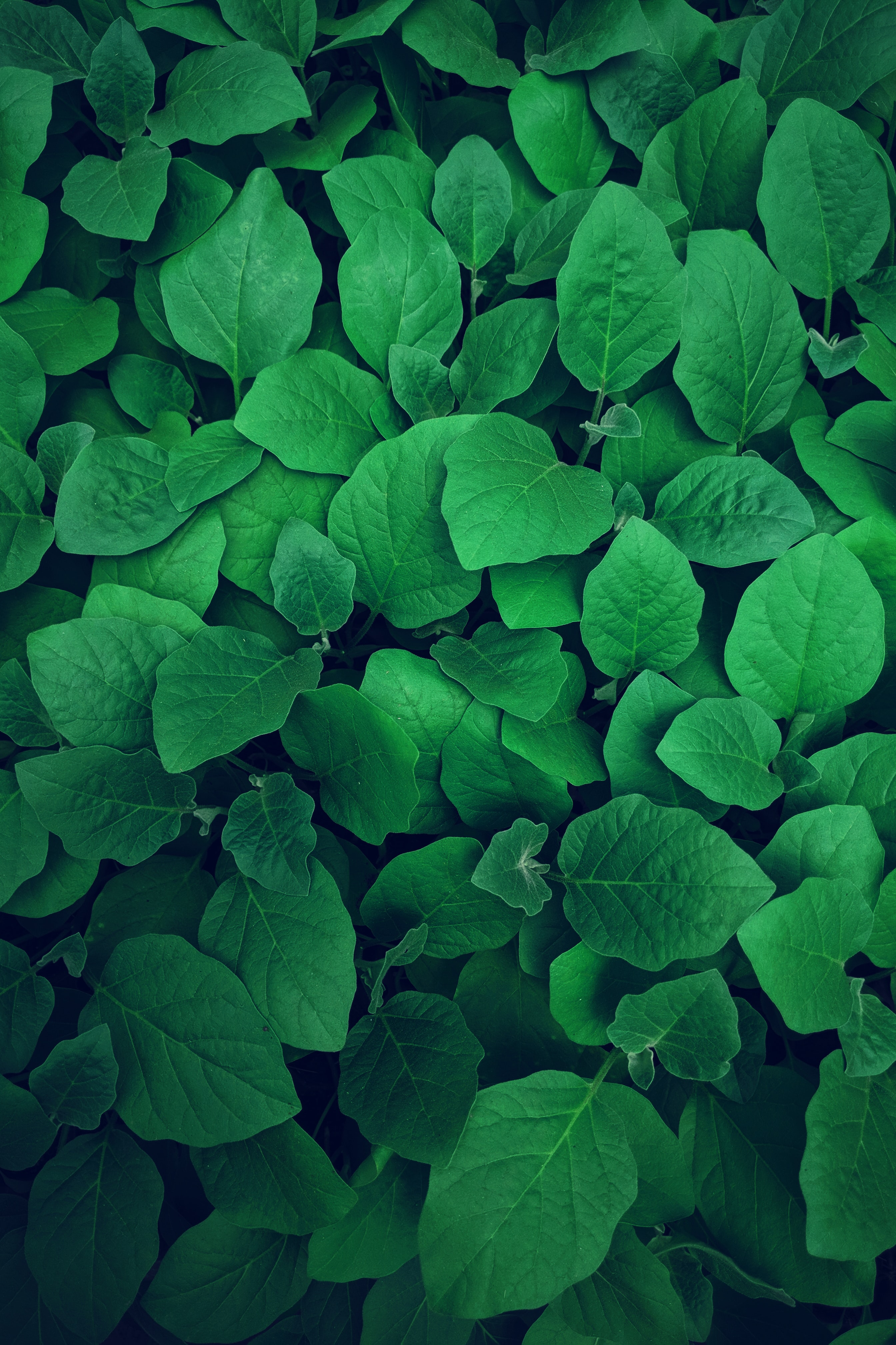 Green Wallpapers Free Hd Download 500 Hq Unsplash