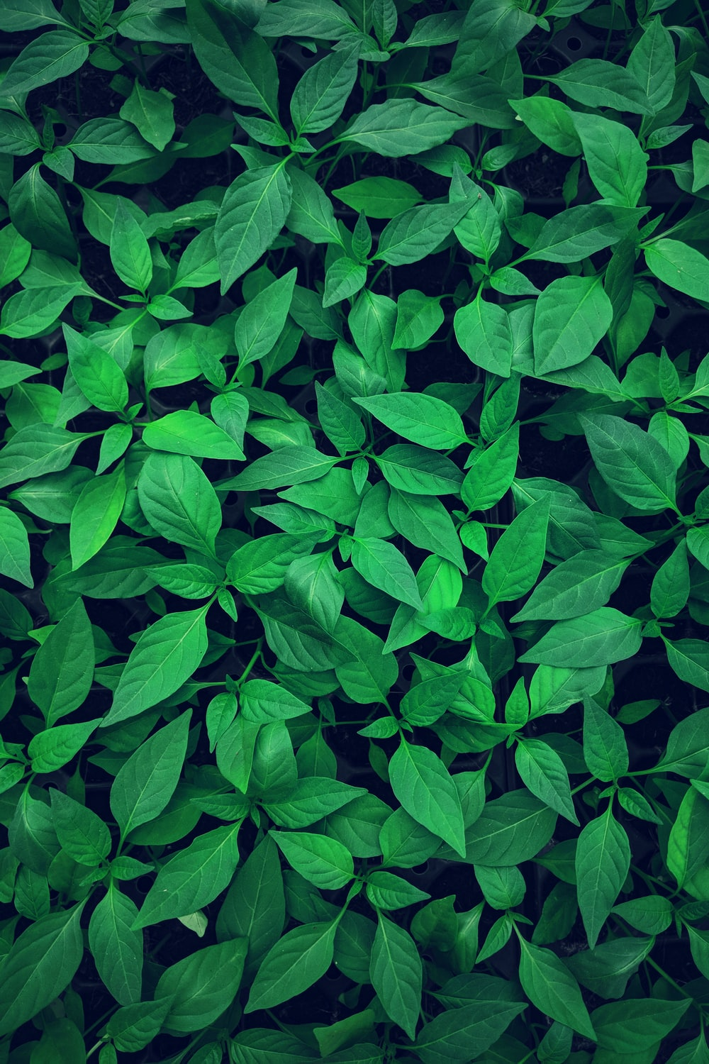 close-up photography of green leafed plant