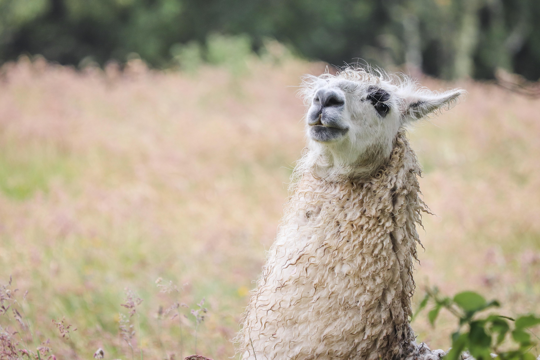 gray animal near green grass