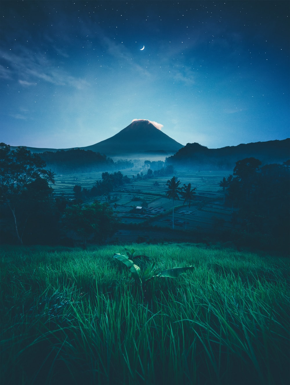 mountain near green trees at night