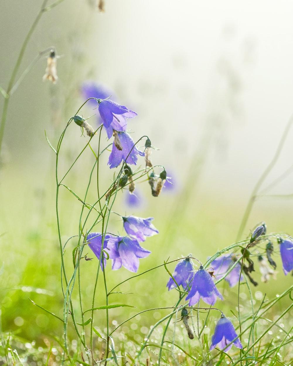 purple flower lot