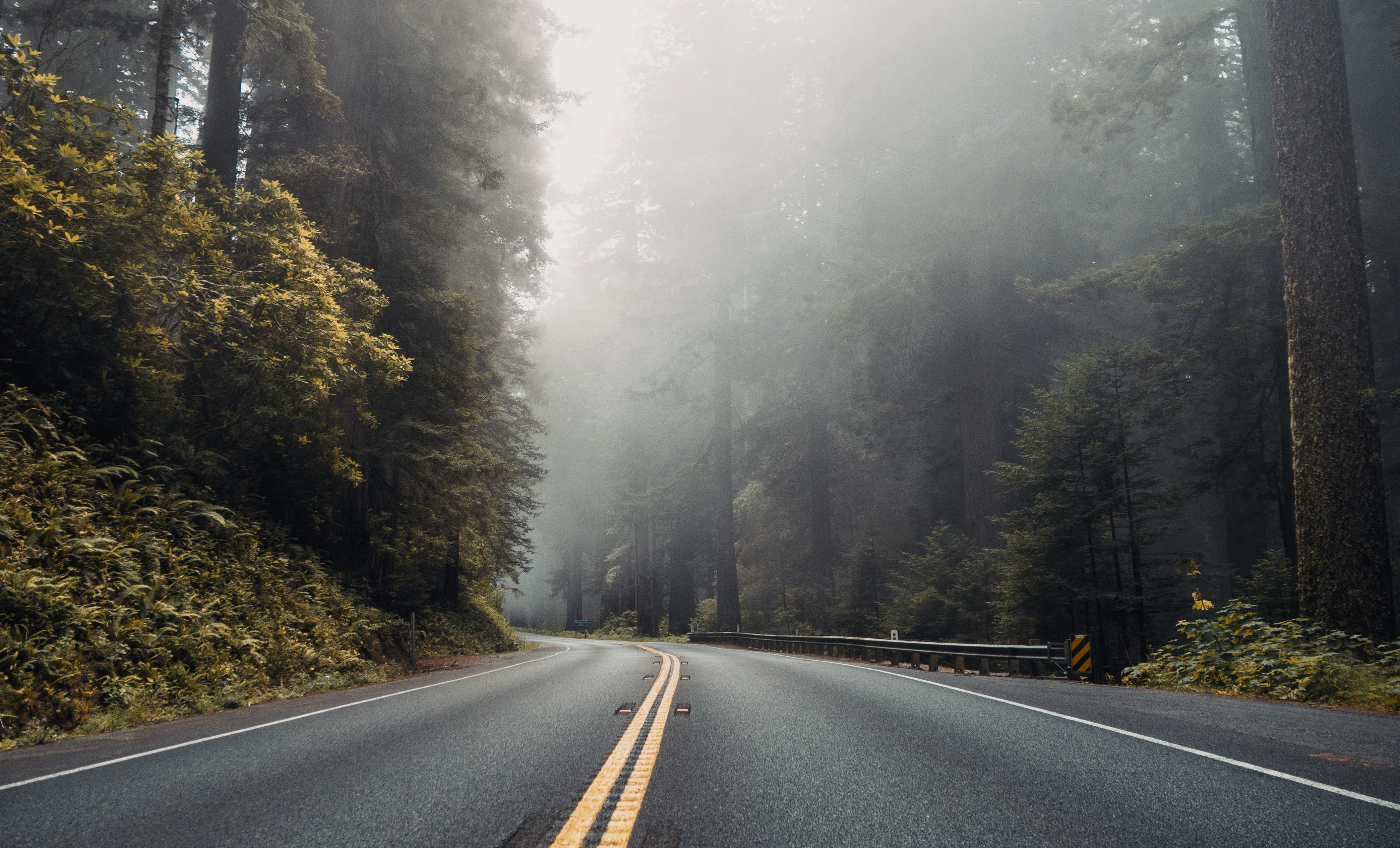 asphalt road near forest