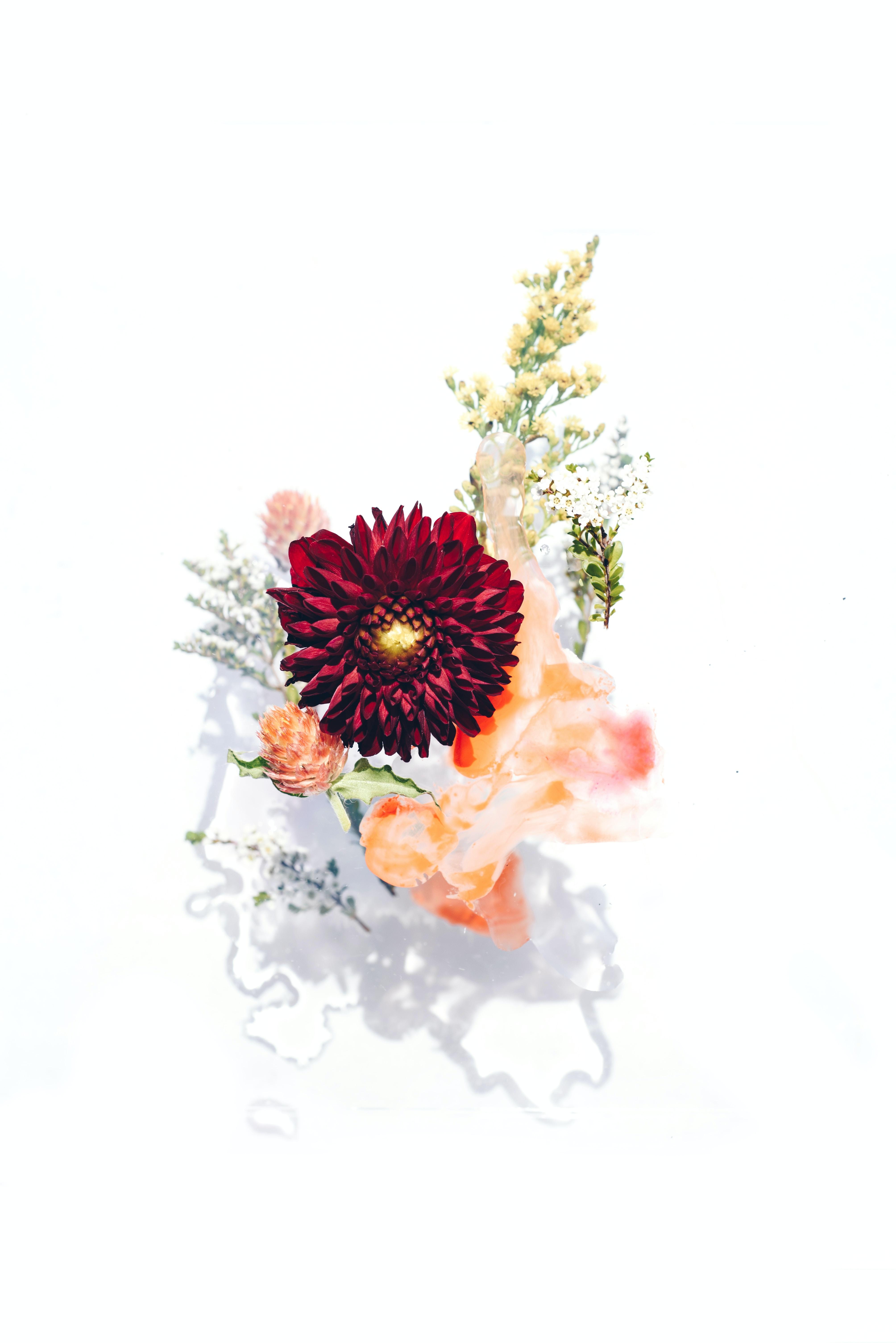 red petaled flowers in bloom