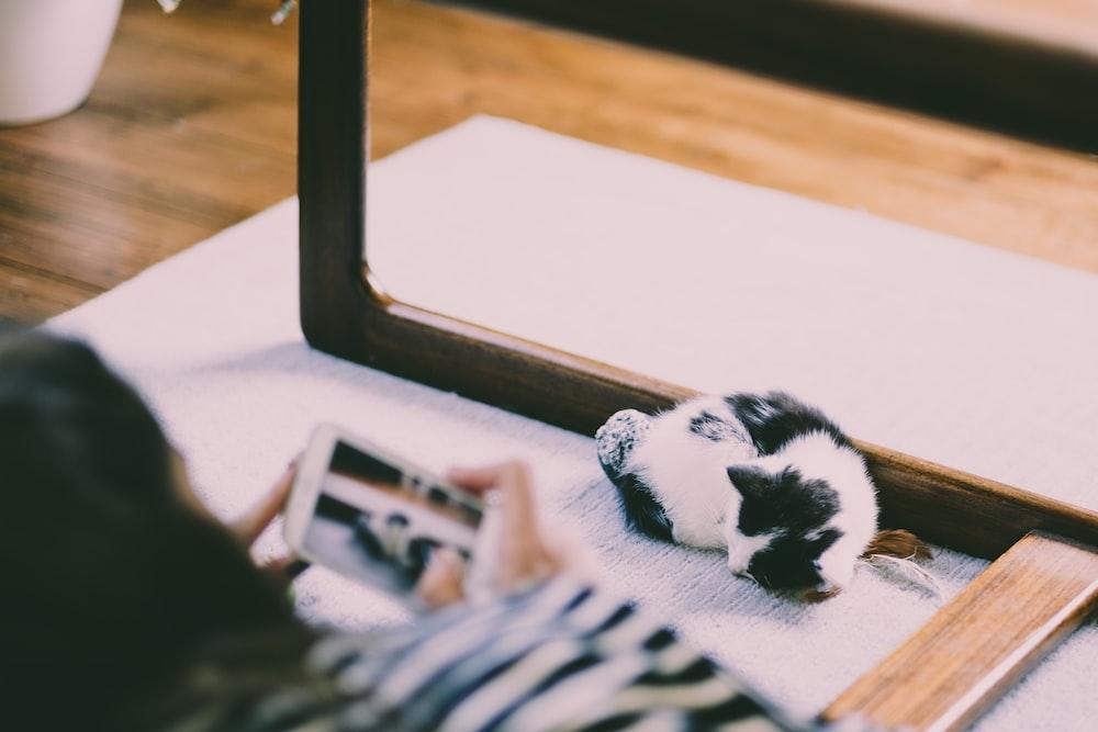 white kitten in front of mirror