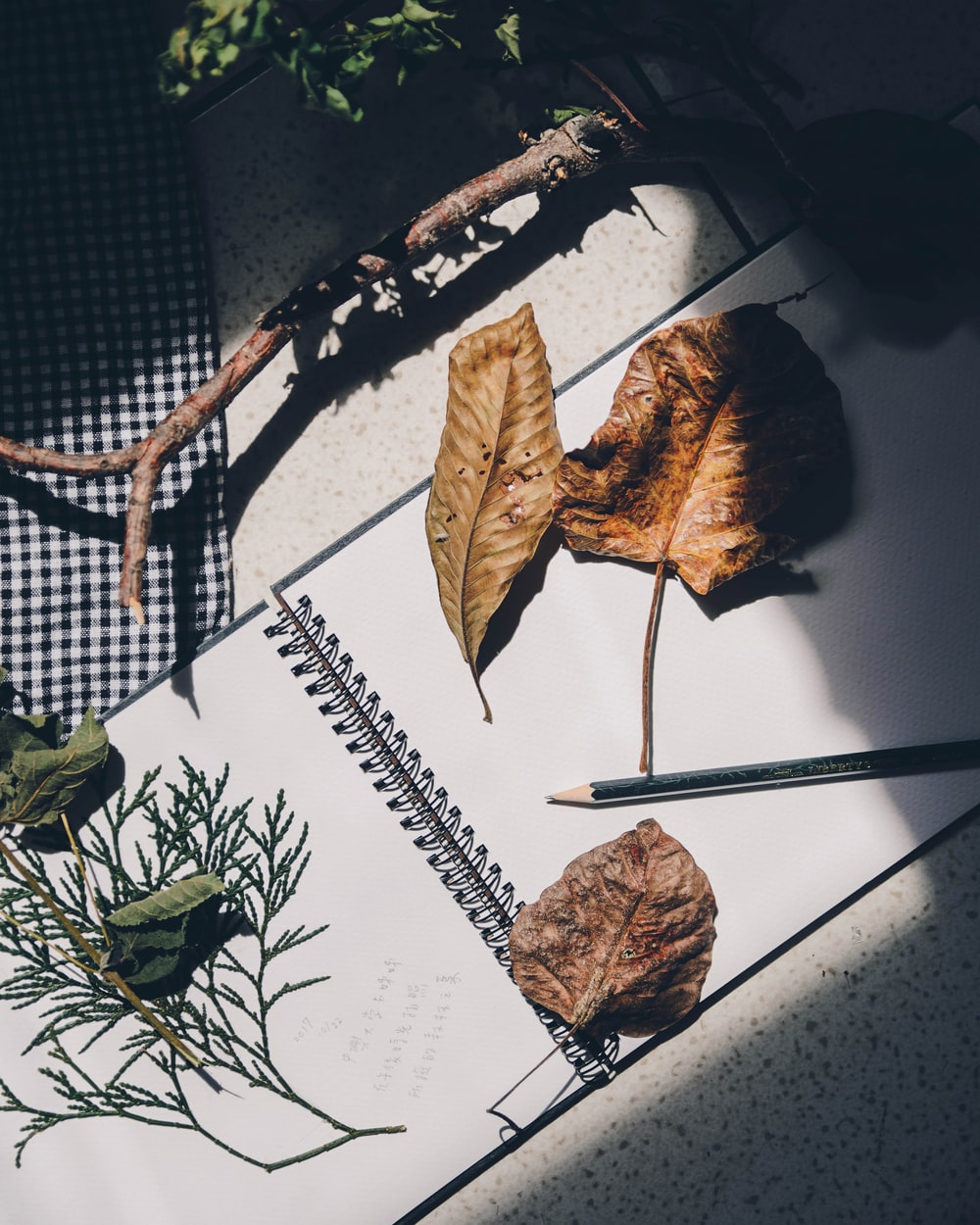 flat lay photography of dried leaf on drawing book