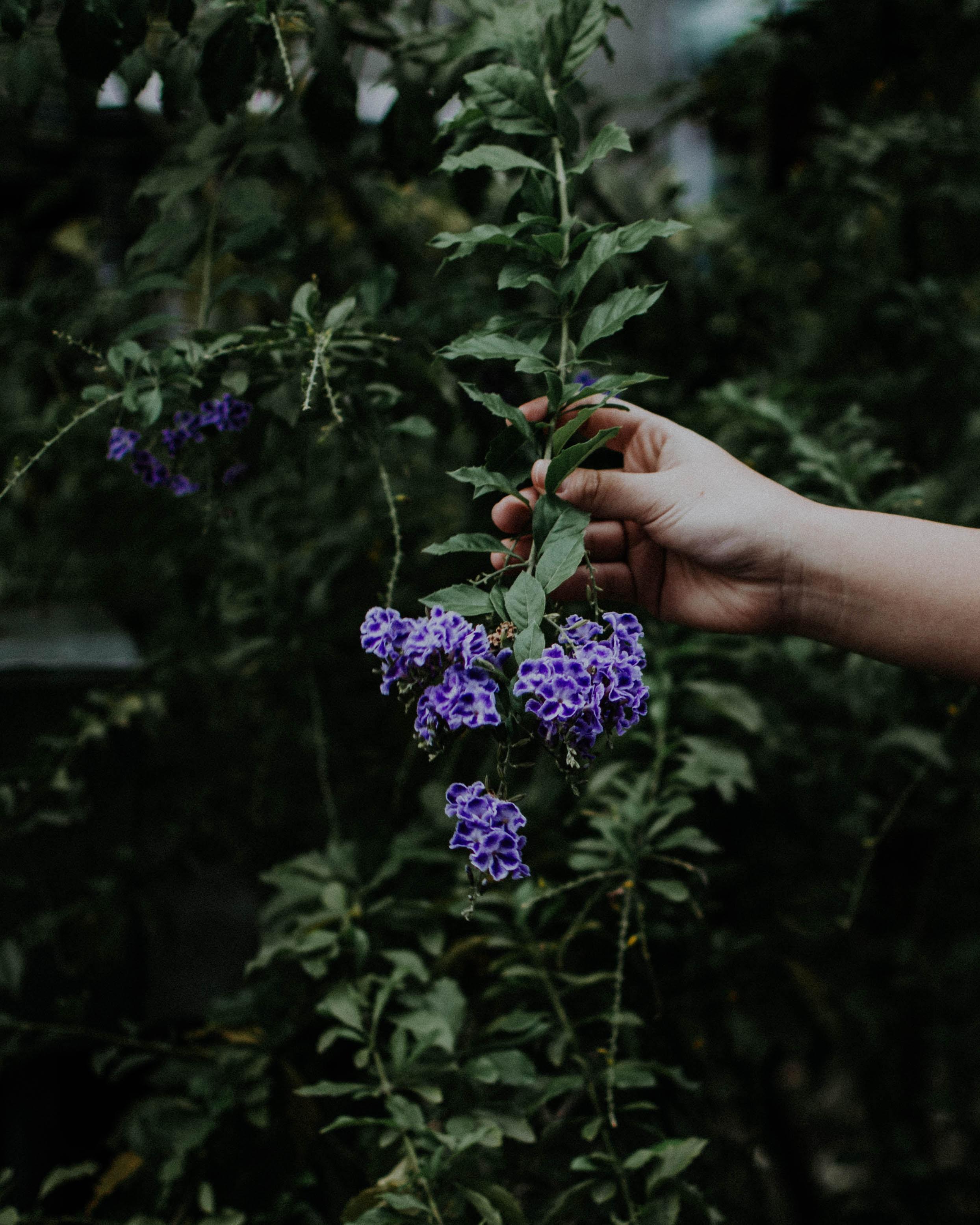 person holding purple petal flower