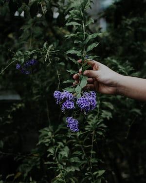 3923. Virágok