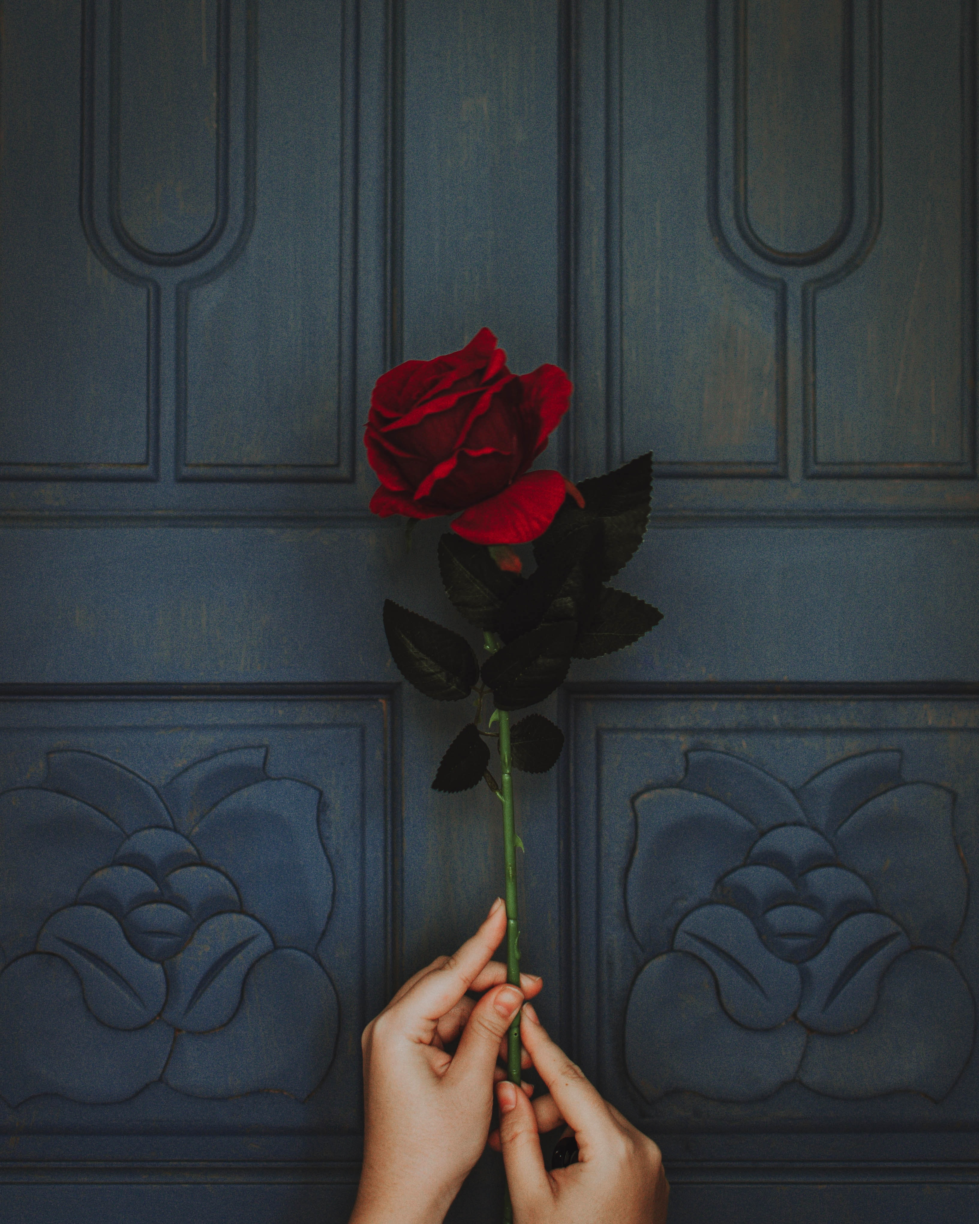 photo of person holding red rose flower
