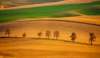 painting of trees on plain land