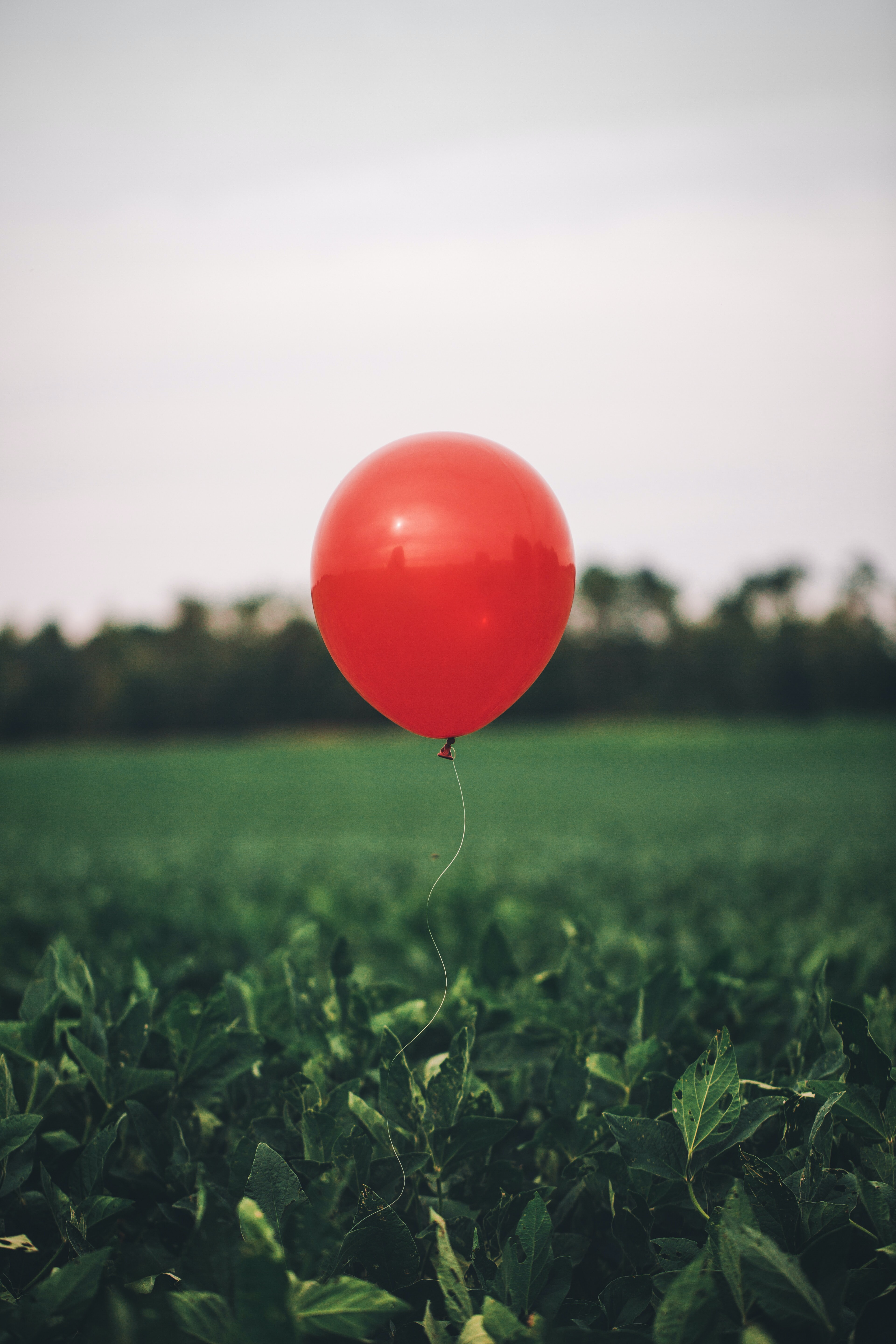 red balloon flying above plants