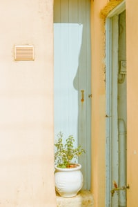 green plant with ceramic vase beside white wooden door