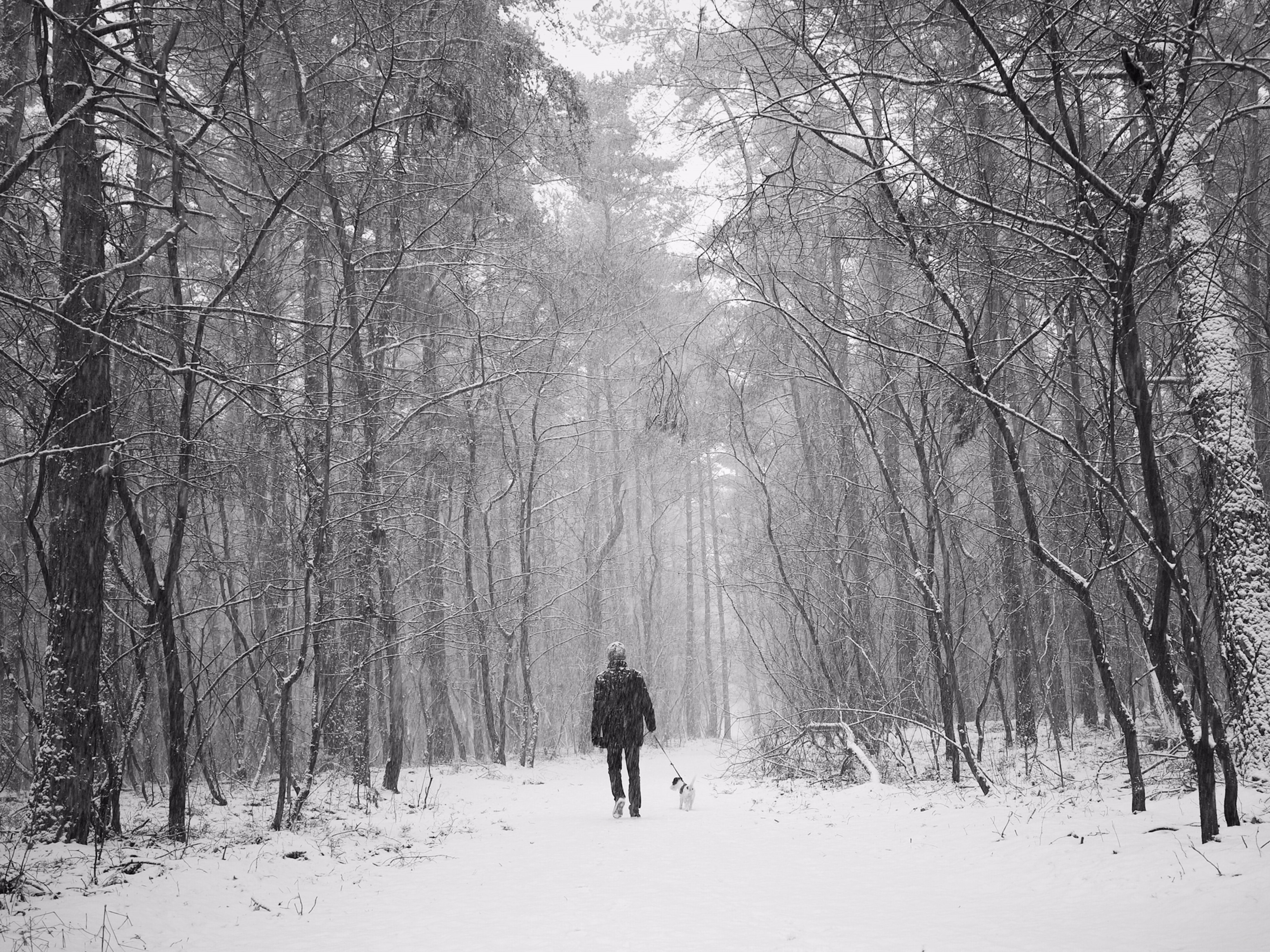 man walking in the middle of icy forest