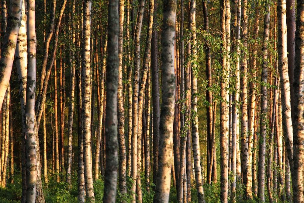 photo of tree trunks