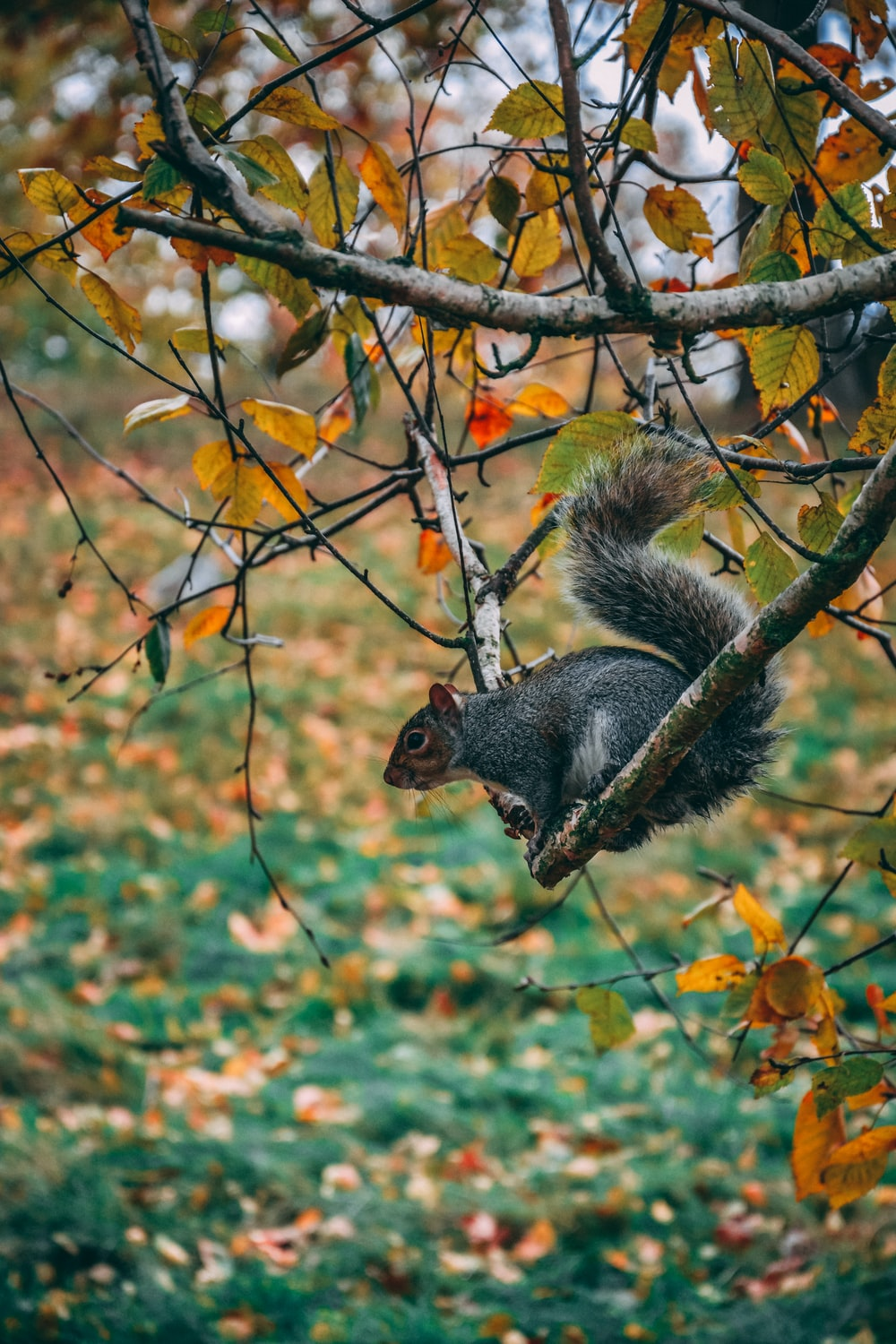 squirrel on branch facing downward