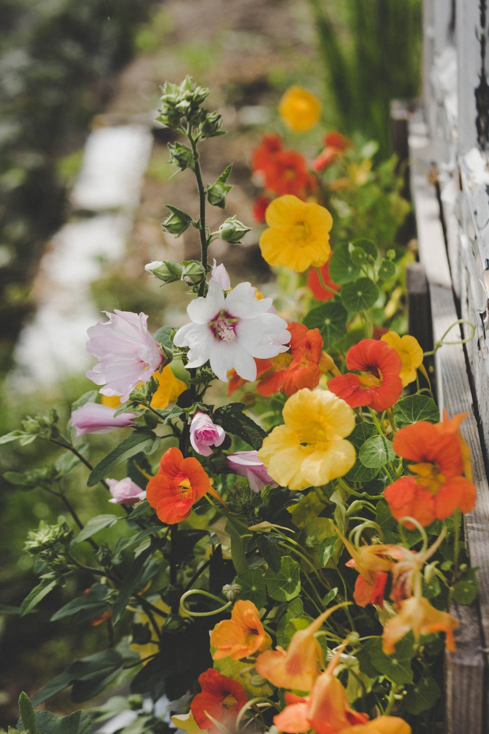 selective focus photography of assorted-color petaled flowers