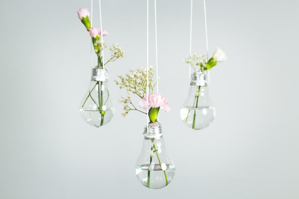 Lightbulb Bulb Vase And Flower Hd Photo By Jagoda Kondratiuk
