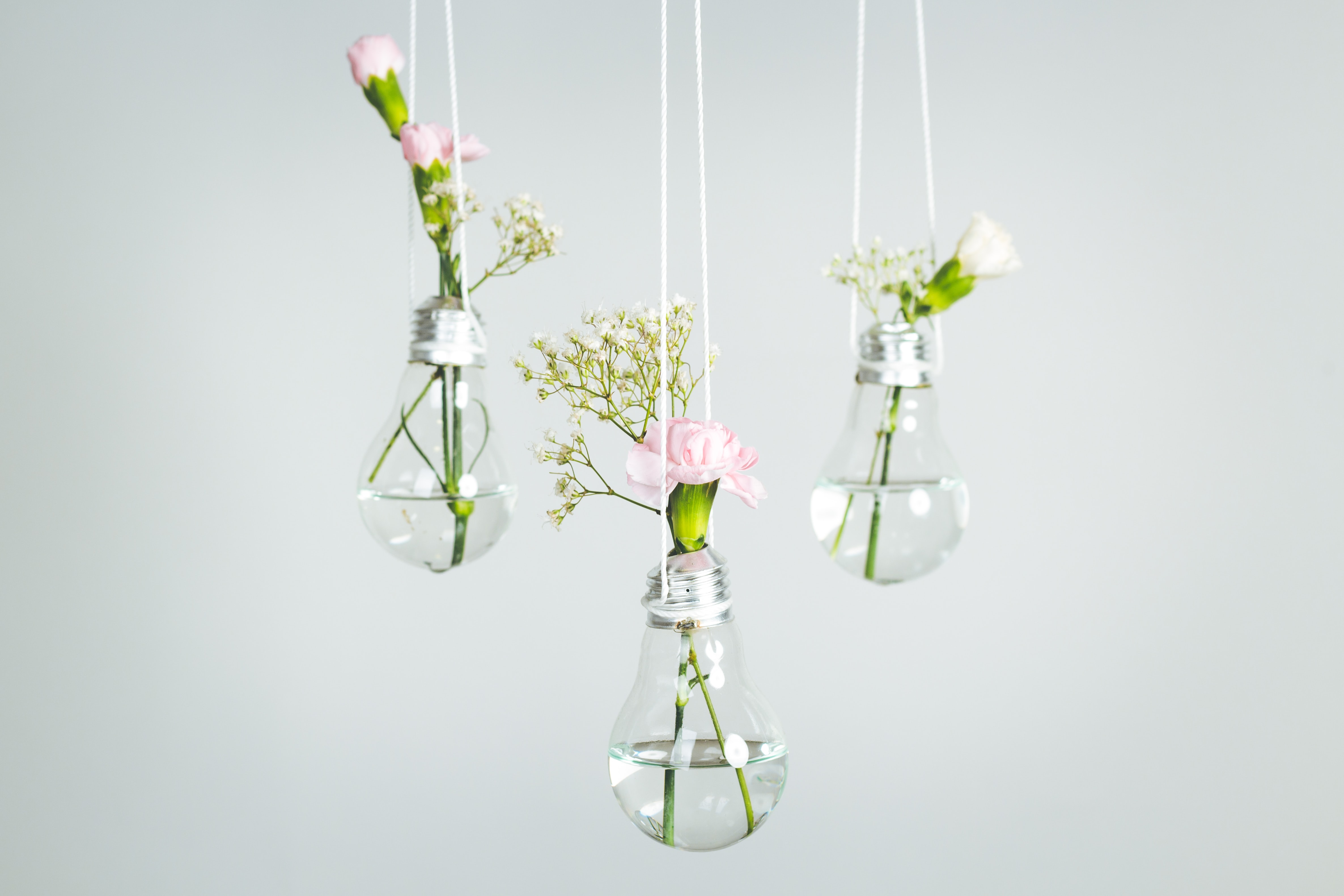 three pink petaled flowers in clear glass bulb vases