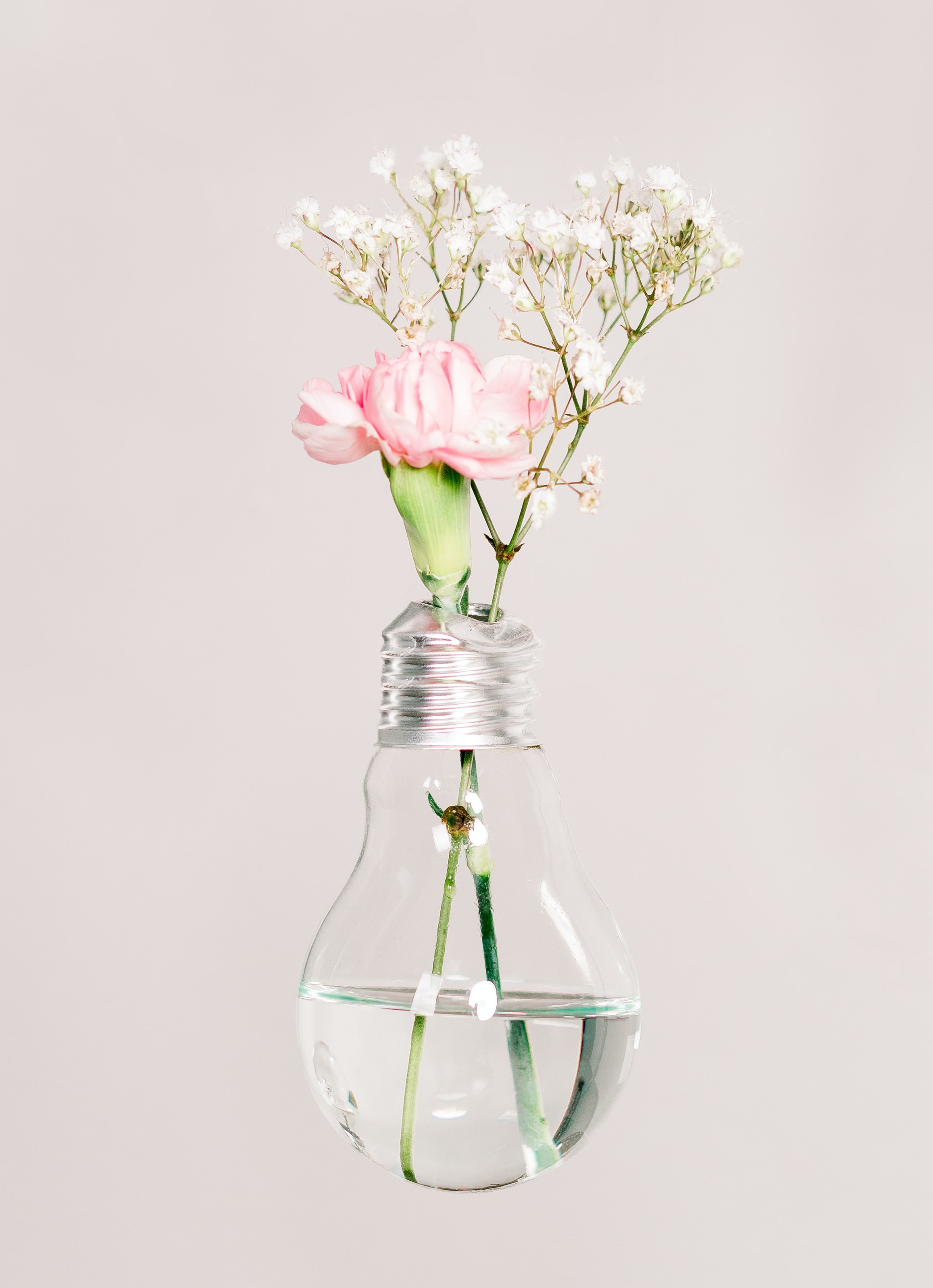 white and pink petaled flowers in clear glass LED bulb vase