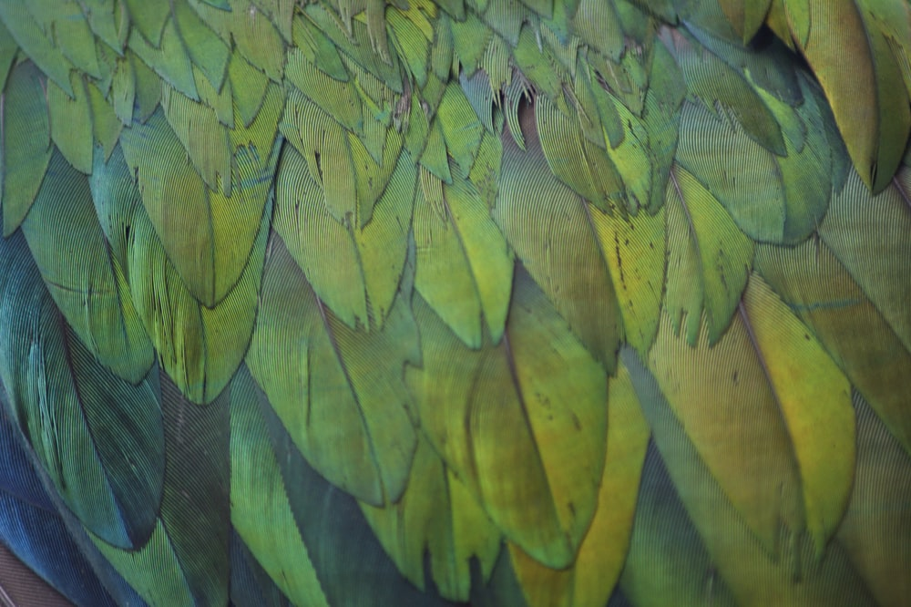 close-up photo of green and yellow feathers